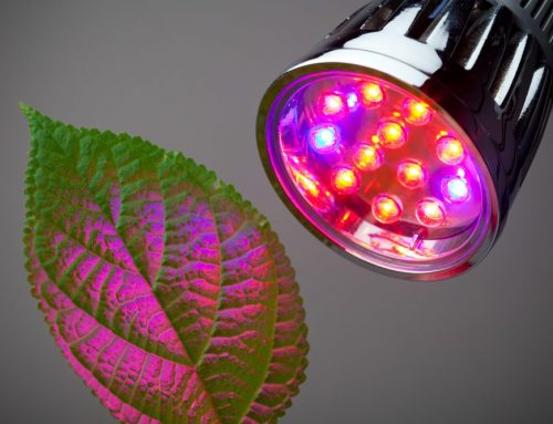 LED Grow Lights: Ultimate Guide 2021